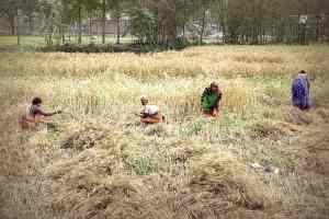 Frauen bei Feldarbeit in Bangladesh (c) Tom Ruebenach