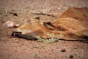 Kein Wasser, keine Nahrung, Hungersnot in Ostafrika © Tom Rübenach