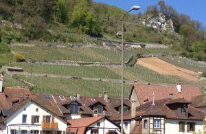 Des vignes sur les toits de Douanne... On remarque une parcelle en reconstitution (à droite).