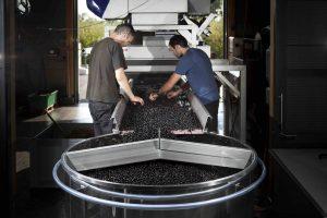 Une cave équipée pour vinifier en raisin rond, après tri de la vendange.