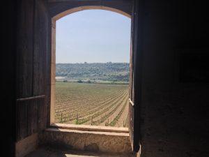 Fenêtre ouverte sur le vignoble sicilien, à Valle dell'Acate.
