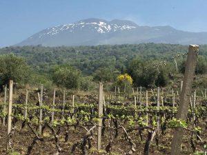 L'Etna vu du sud, une terre propice aux vins blancs.