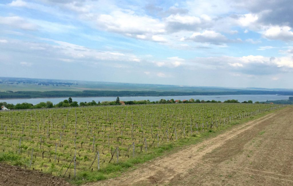 Bulgarie: la renaissance des coteaux du Danube