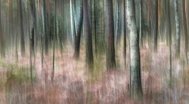 skogsljuset_1.jpg