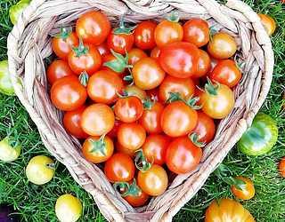 ins my edible garden 70382643 1400553206763752 7493668280716568561 n