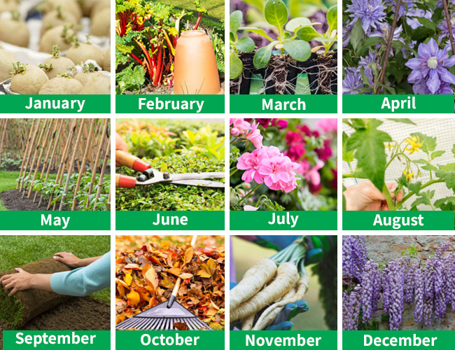 Gardening For Beginners Thompson & Morgan