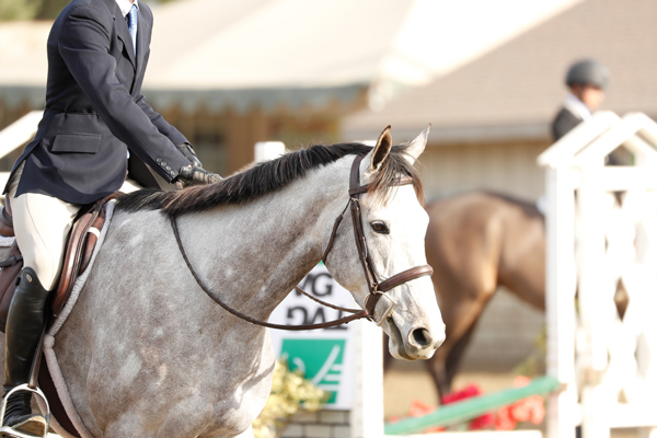 Thoroughbred Classic Horse Show