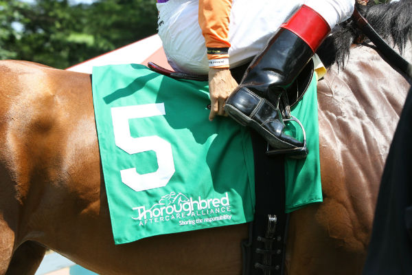 TAA saddle towel with jockey