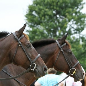 New Vocations Show & TIP Championships