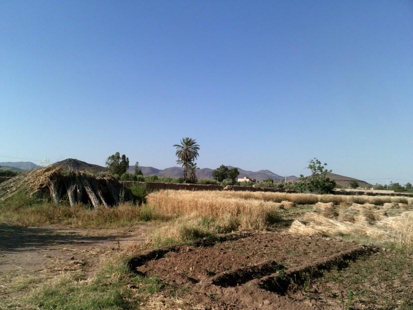 Moroccan Farm