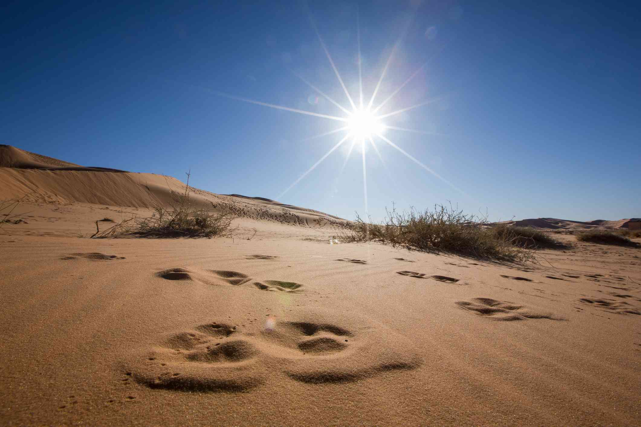 learn about the sahara