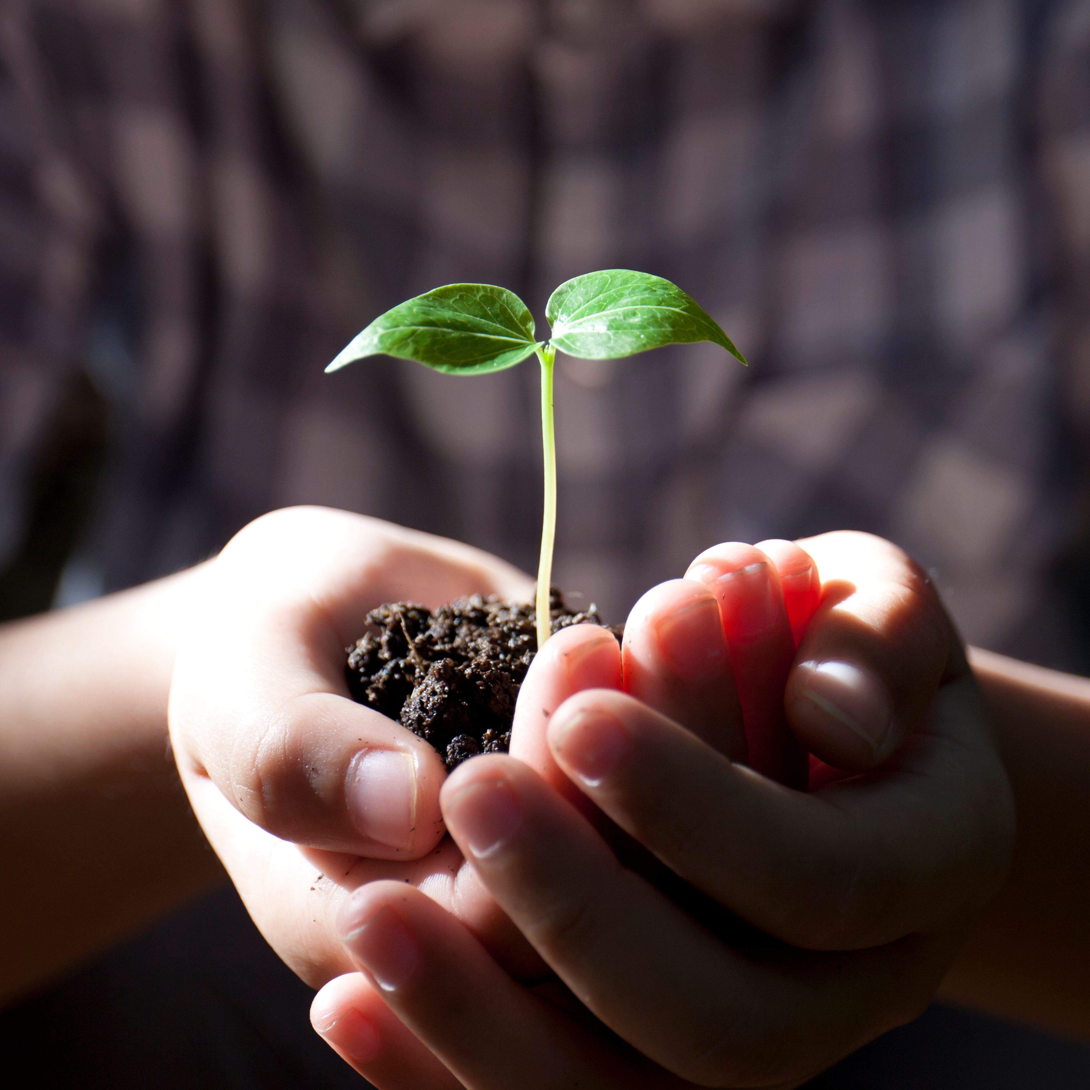 Compare The Life Cycle Of Flowerless Seed Plants And