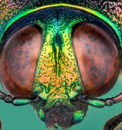 beetle body part diagram labeled [ 2131 x 1406 Pixel ]