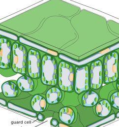 diagram of reforestation [ 1200 x 675 Pixel ]