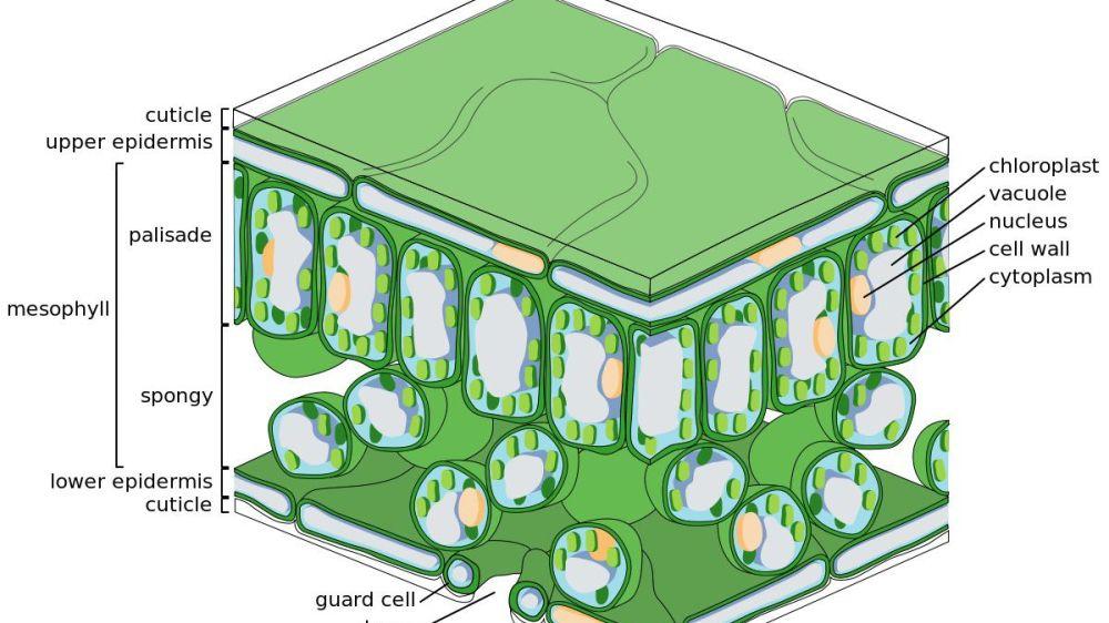 medium resolution of diagram of reforestation