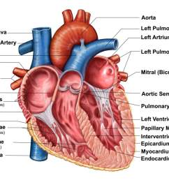 the interior anatomy of the heart diagram with labels  [ 1500 x 994 Pixel ]