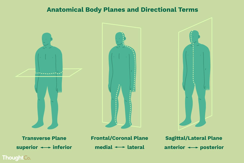 Body Parts German Worksheet