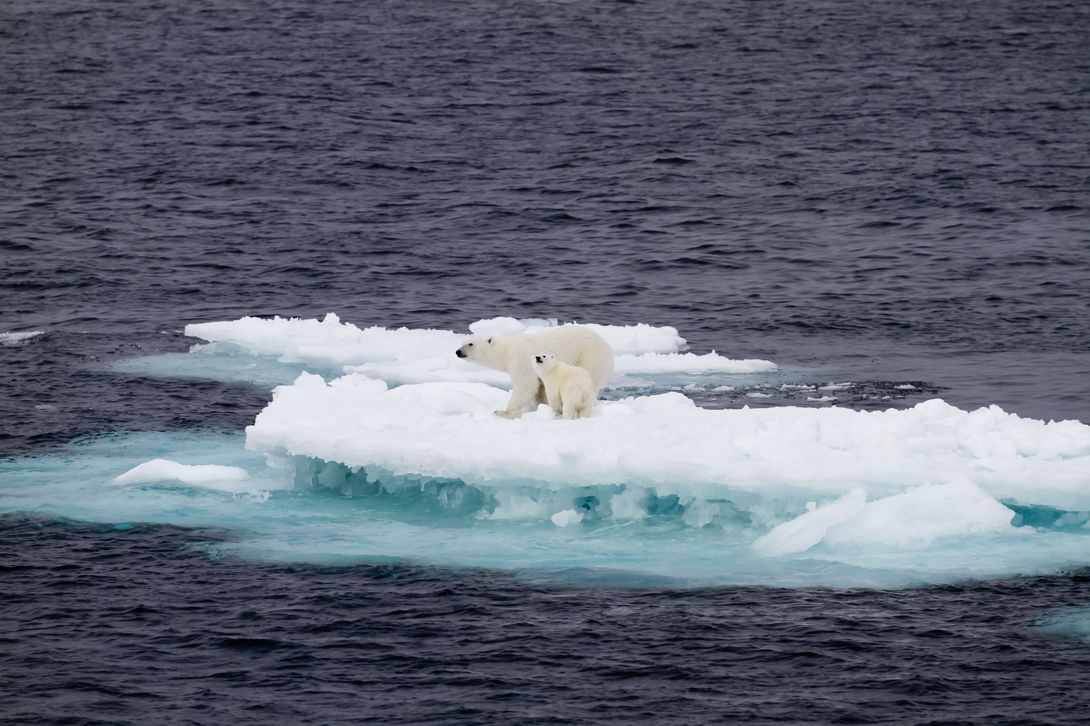 The Effects Of Global Warming On Animals