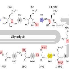 glycolysi diagram biology [ 1500 x 1000 Pixel ]
