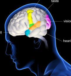 diagram of brain and pain [ 1500 x 844 Pixel ]