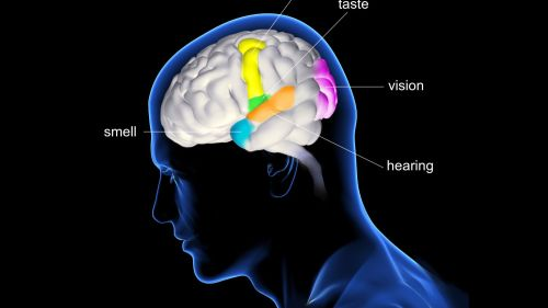 small resolution of diagram of brain and pain