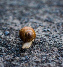 snail habitat diagram [ 2121 x 1414 Pixel ]