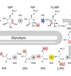 glycolysi diagram biology [ 1000 x 1000 Pixel ]