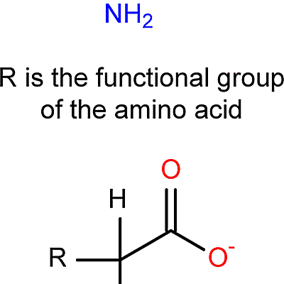 Learn About Amino Acid Structures
