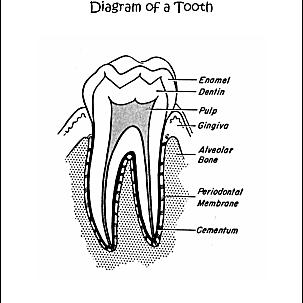 Dental Health Word Search Printables