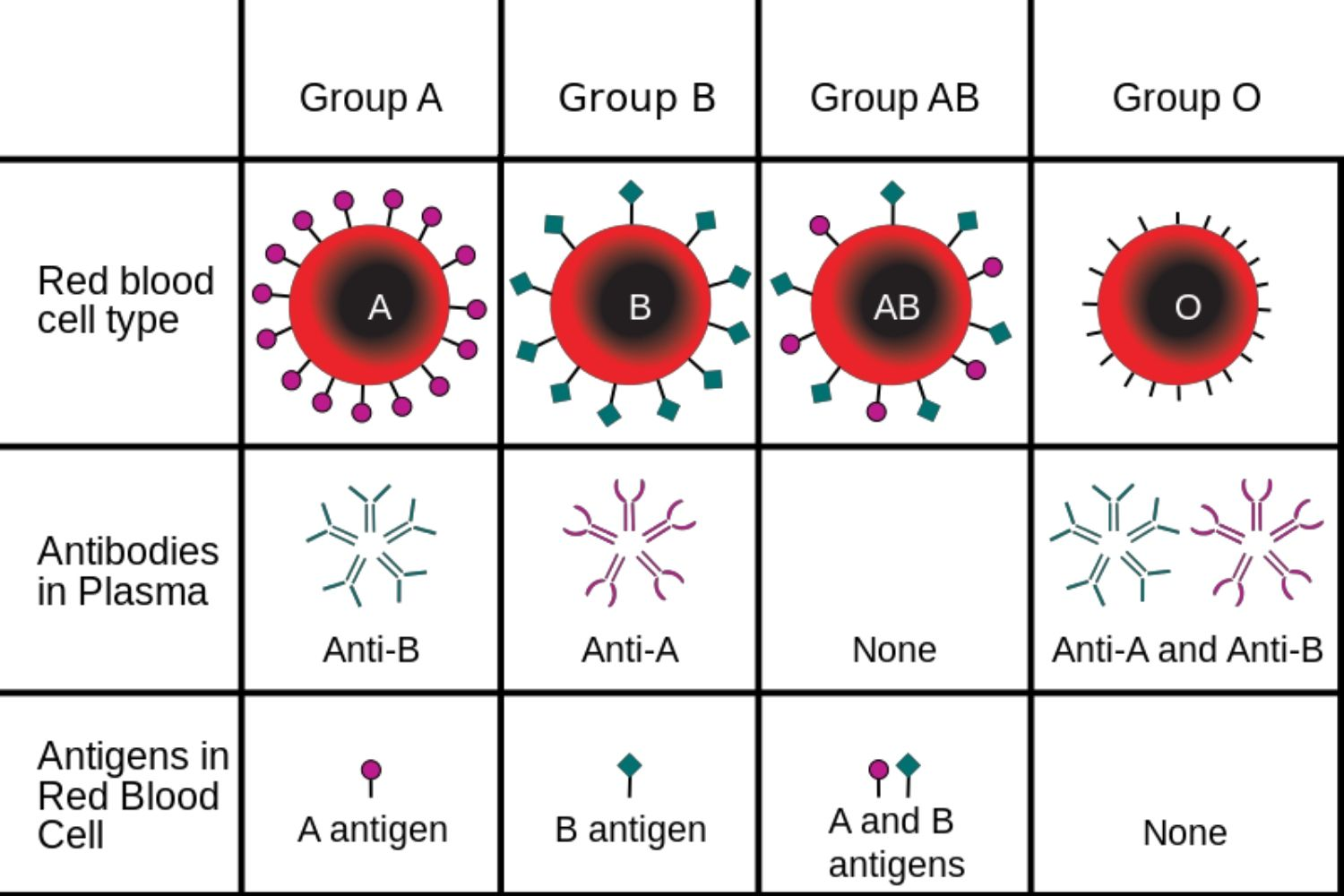 hight resolution of abo blood groups
