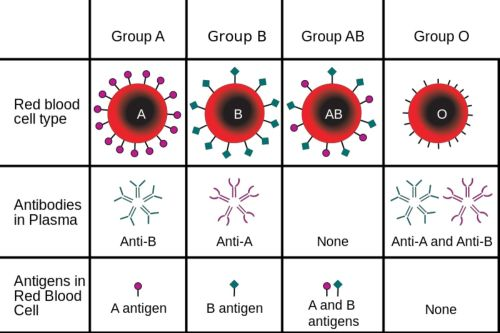 small resolution of abo blood groups