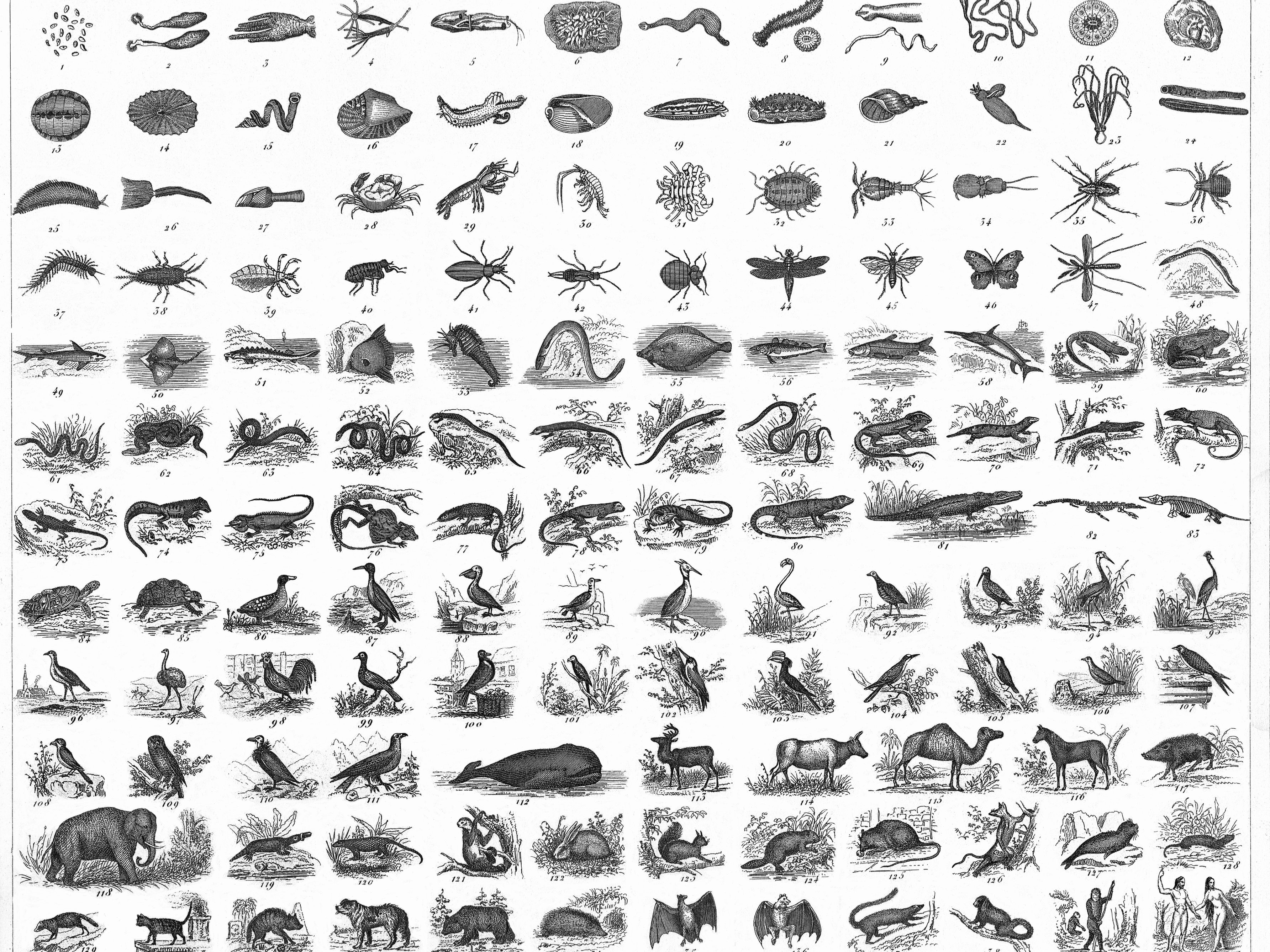 Science Of Classifying And Naming Organisms