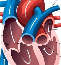 heart diagram [ 4402 x 2476 Pixel ]