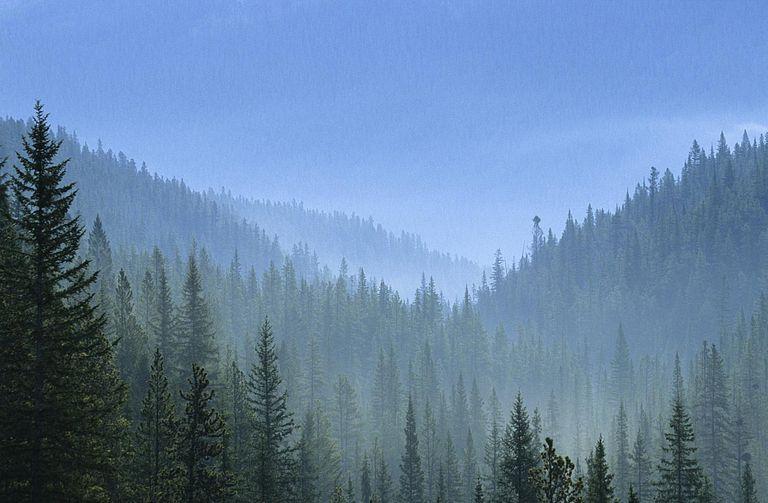 land biomes taigas boreal