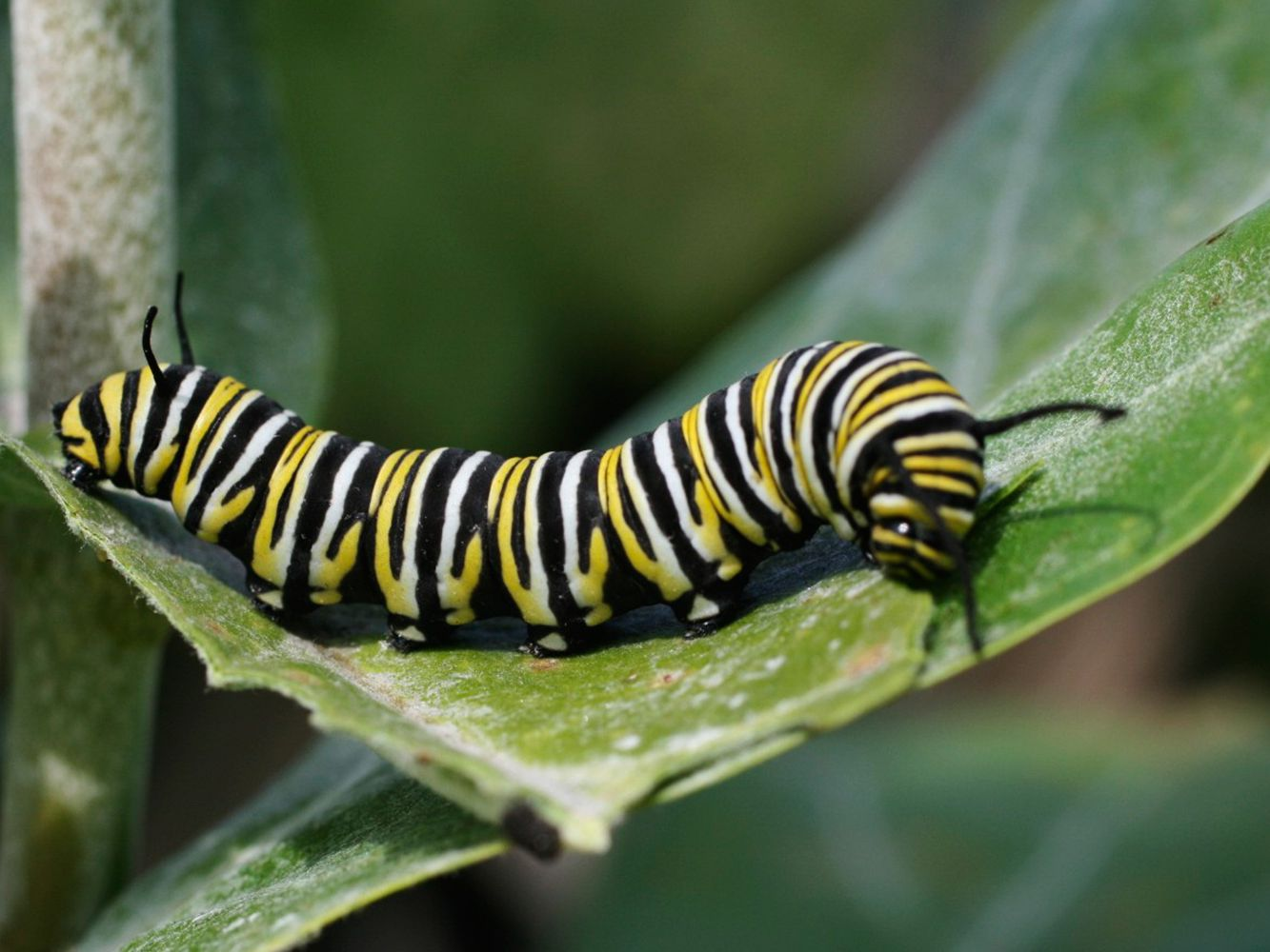 Fascinating Facts About Caterpillars