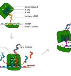 making protein diagram [ 1000 x 1000 Pixel ]