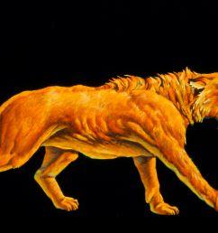 tiger tooth skull diagram [ 3307 x 2480 Pixel ]