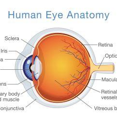 anatomical diagram of the human eye [ 2059 x 1456 Pixel ]