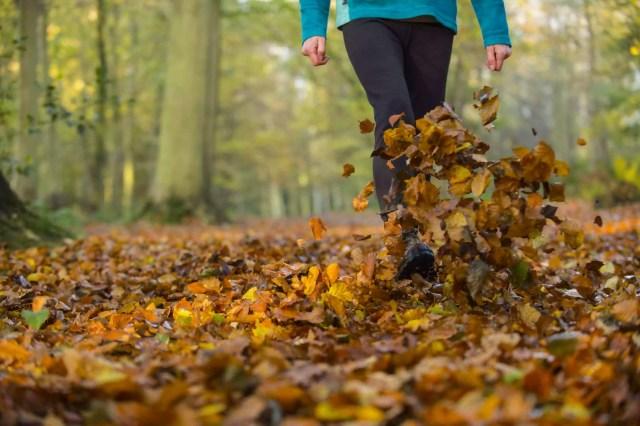 Woman walking and kicking up beech leaves, Norfolk