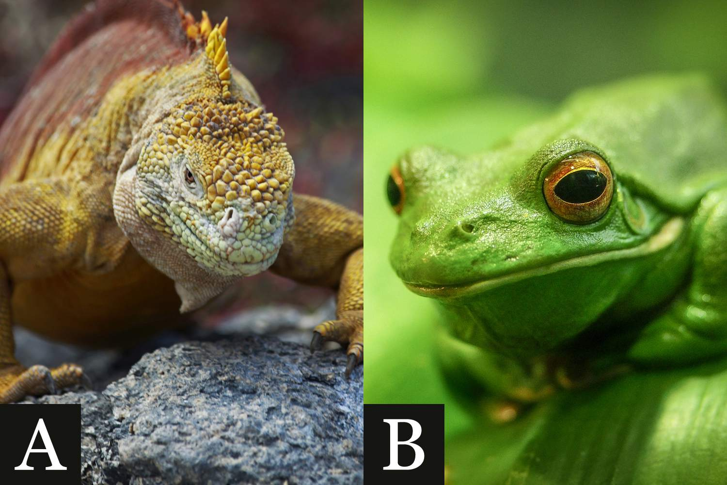 Find Out How To Tell Apart A Reptile And Amphibian
