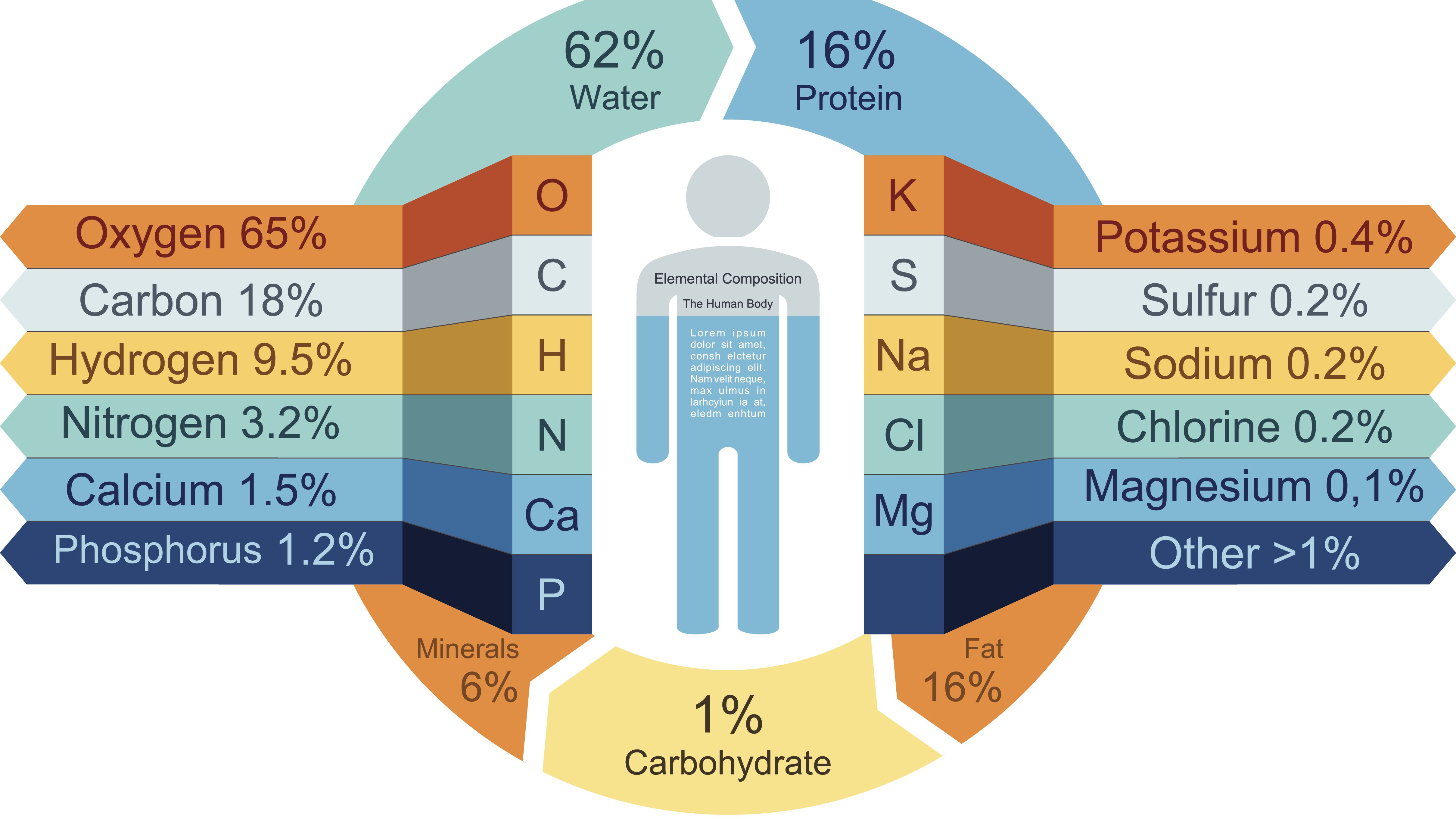 What Atoms Make Up Carbohydrates