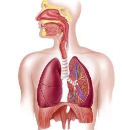diagram of respiratory system nose [ 1500 x 1057 Pixel ]