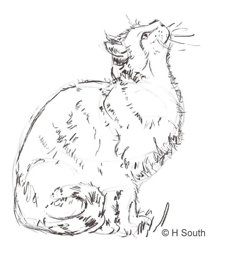 How to Draw and Sketch Cats