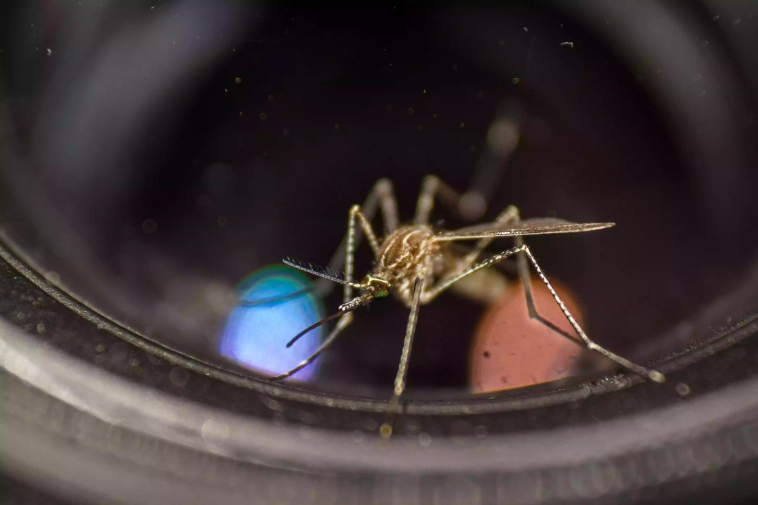 Mosquitoes may be lured into traps using carbon dioxide, heat, humidity, or hormones.