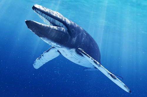 Ilustração do computador de uma baleia azul.