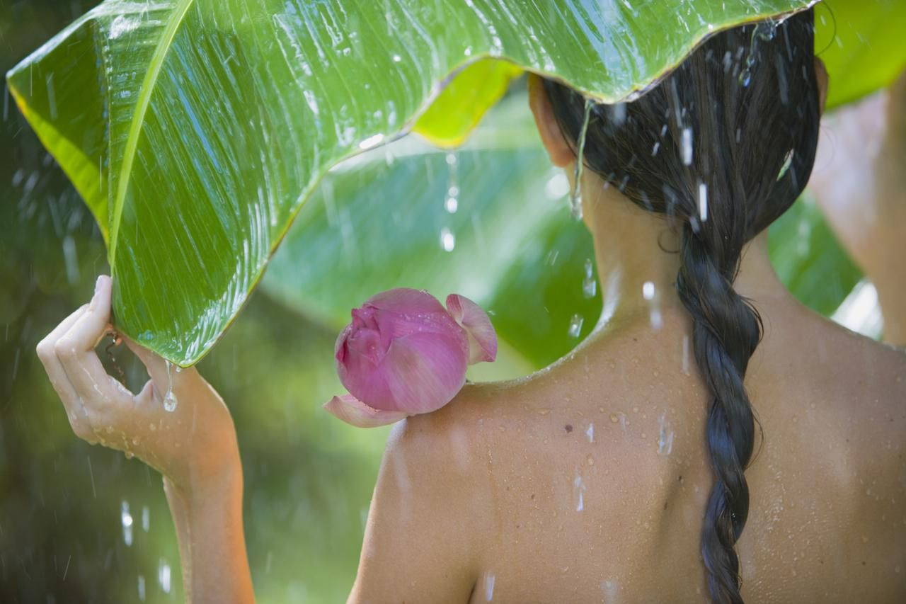 Tropical Rainforests Are Nature S Medicine Cabinet