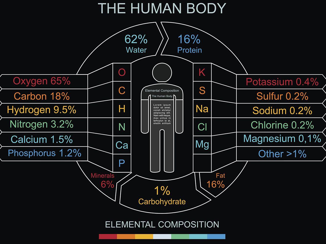 Elemental Makeup Of Human Body