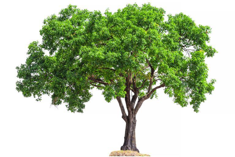 tree leaf chart shape