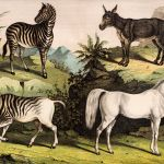 10 Recently Extinct Horse Breeds