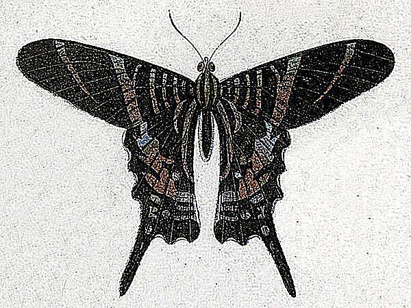10 Recently Extinct Insects and Invertebrates